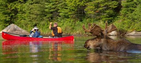 moose-canoe-trip-algonquin