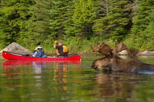 tina mcauley moose - 640