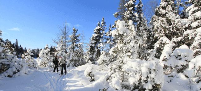 ski in Algonquin park