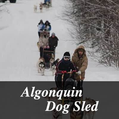 dog-sled-images